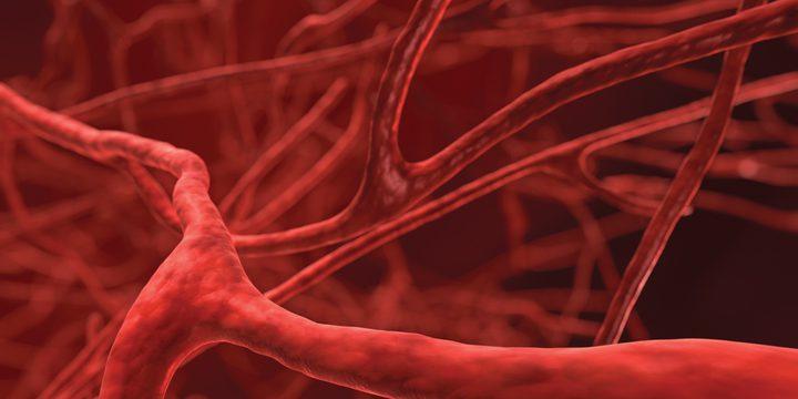 اكتشاف طريقة لحماية الأوعية الدموية من التصلب