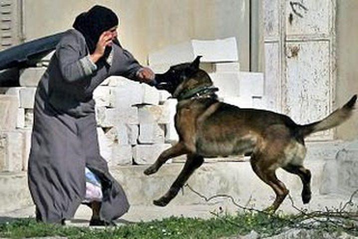 بيتسيلم: الاحتلال يتصرف بوحشية باستخدامه الكلاب لمهاجمة المدنيين الفلسطينين (صور)