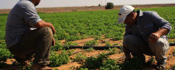 اللجنة العليا لبرنامج المساعدات الزراعية تقرّ تنفيذ 133 مشروعاً بتمويل من الاتحاد الأوروبي