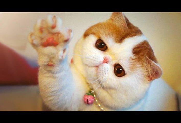 فيديو.. قطة تلقي التحية كالبشر