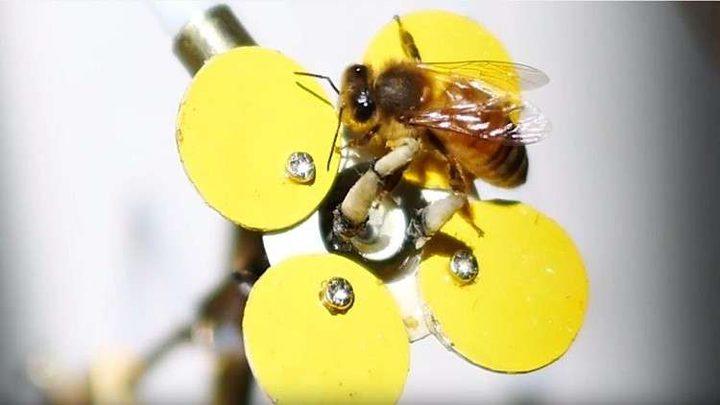 فنان يعيد النحل بطريقة فريدة!ّ