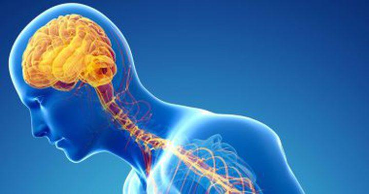 الجهاز السمبثاوى.. كيف يتحكم هذا الجزء الصغير فى كل أعضاء جسدك