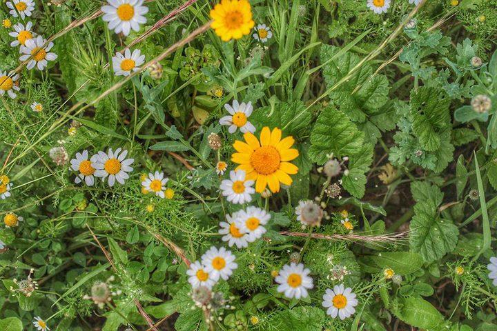 فصل الربيع يبدأ الثلاثاء (صور)