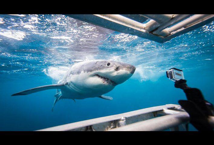 رغم محاولتها إلتهامه...غواص ينقذ سمكة قرش (فيديو)