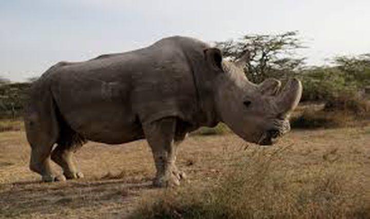 انقراض وحيد القرن الأبيض بوفاة اخر ذكوره!