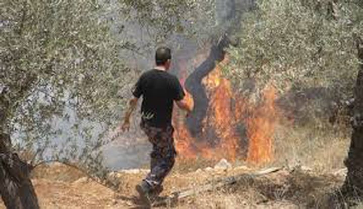 الاحتلال يحرق مزروعات في سبسطية