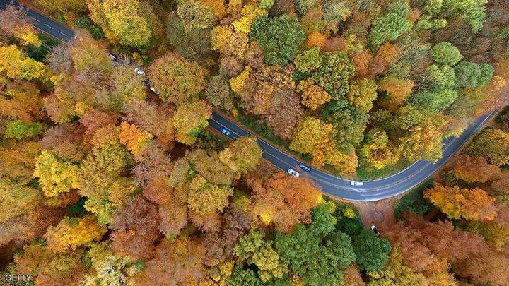 العالم الأخضر.. أكثر 15 مدينة امتلاكا للأشجار