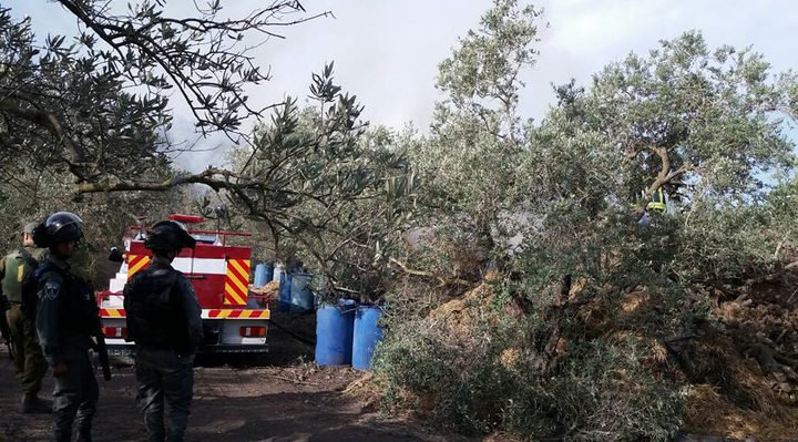 الخارجية: الاحتلال يشن حرباً على أشجار الزيتون