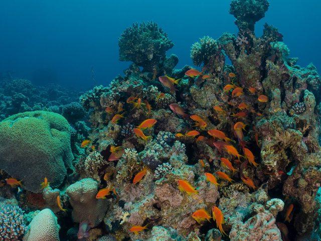 اكتشاف منطقة شعب مرجانية غامضة وأسماك غير معروفة!