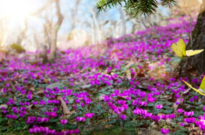 فوائد فصل الربيع من الناحية النفسية والصحية