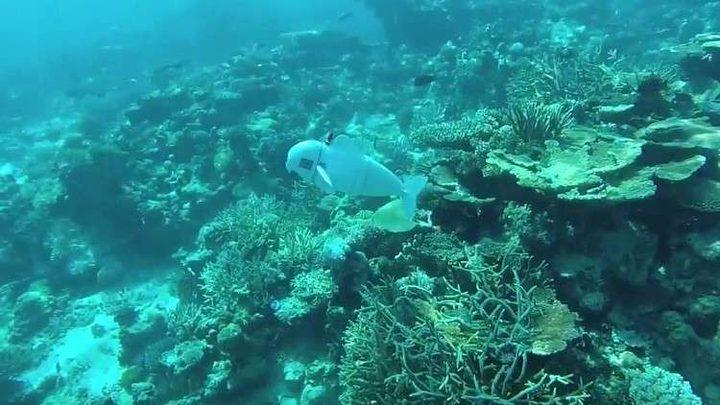 """""""سمكة روبوت"""" تستكشف عالم البحار!"""