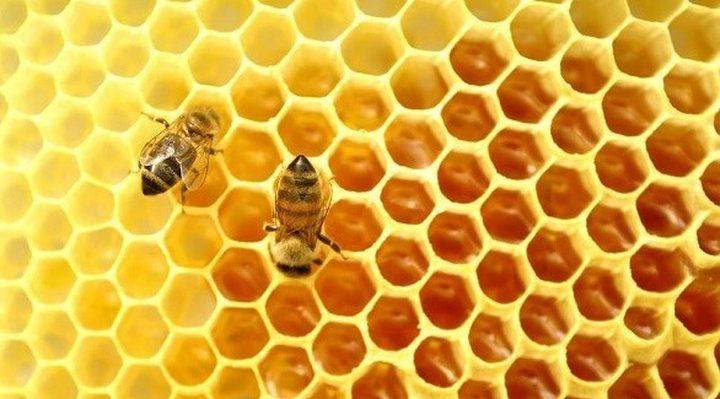 """""""صمغ النحل"""" سر صحة وجمال البشرة"""