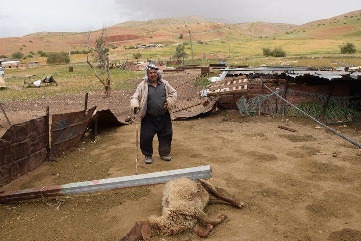"""يوم """"العواصف"""".. المزارع الضحية (صور)"""