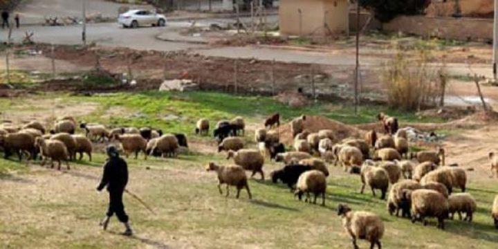 قوات الاحتلال تُطلق النار على رعاة جنوب غزّة