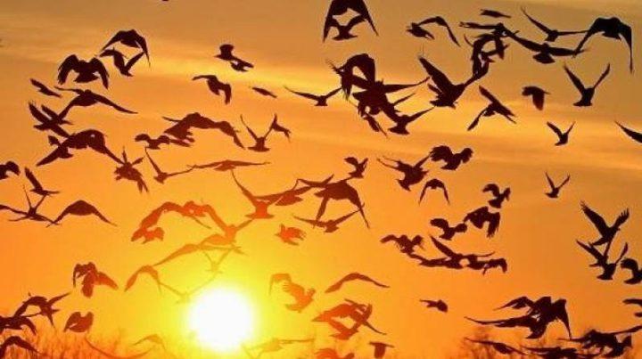 العلماء يحلون لغز هجرة الطيور!