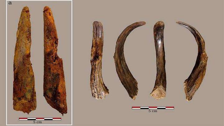 اكتشاف أقدم أداة خشبية صنعها الإنسان