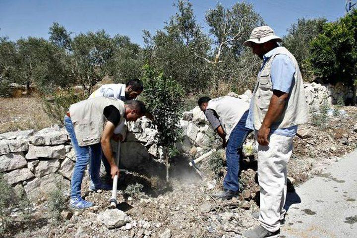 زراعَة أشجار في أراضي بلدة قوصين المهدّدة بالمصادرة
