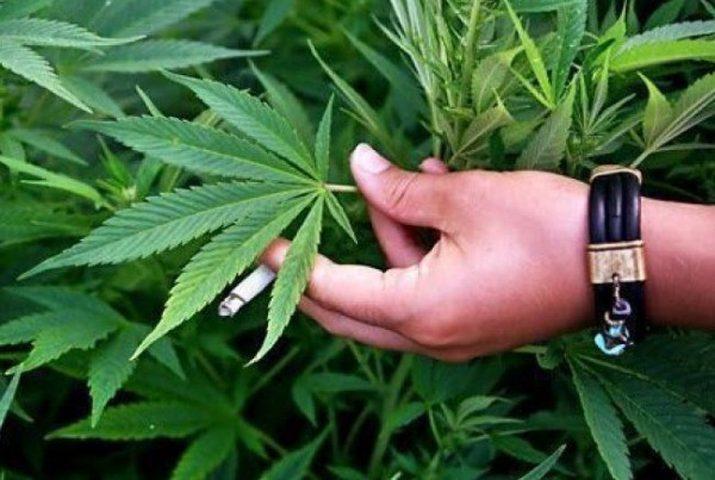 ضبط نصف كغم مخدرات في قلقيلية و419 شتلة ماريغوانا في الخليل