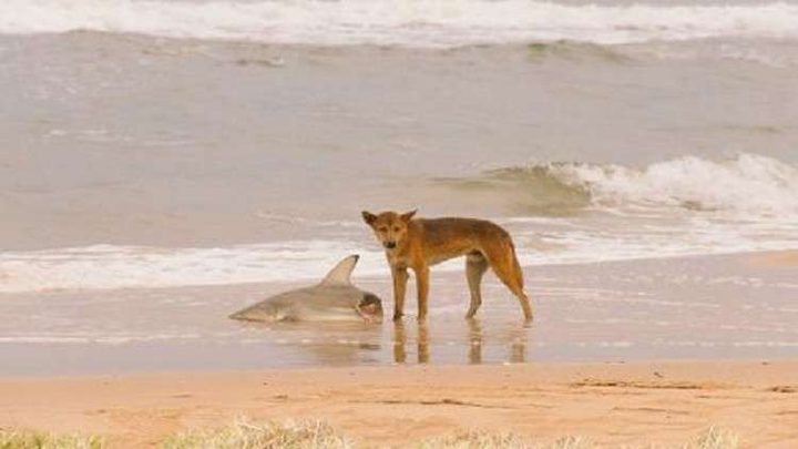 """سر الصورة الأكثر """"أسترالية"""" في العالم.. !"""