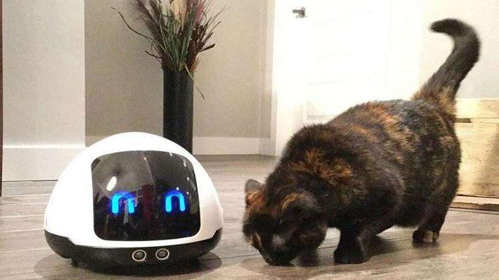 روبوت فريد للعناية بالحيوانات الأليفة!