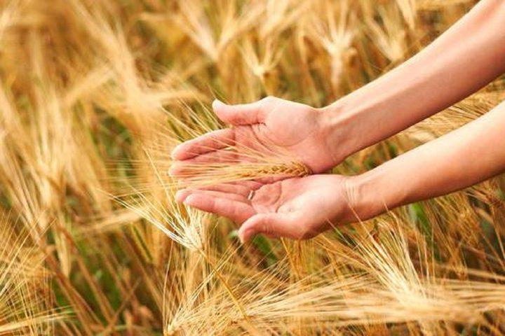 ما هي علامات الإصابة بحساسية القمح ؟