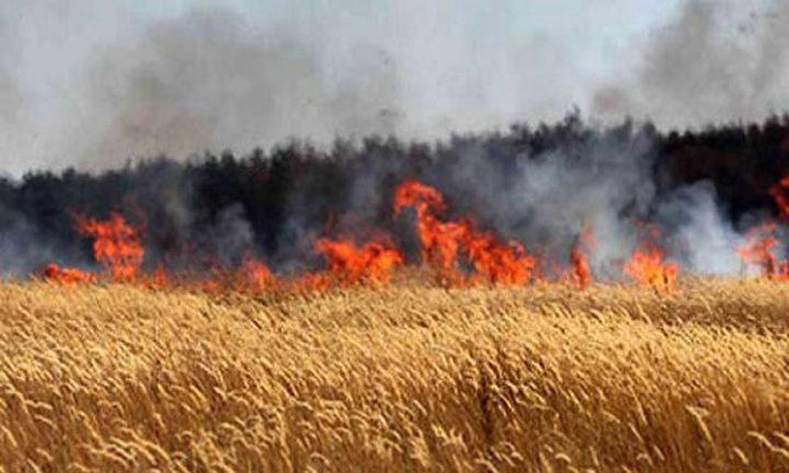 اندلاع حريق في حقول القمح داخل السياج الفاصل شرق جباليا