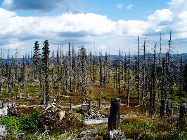 هل الأراضي المحمية بيئياً هي حقاً محمية؟