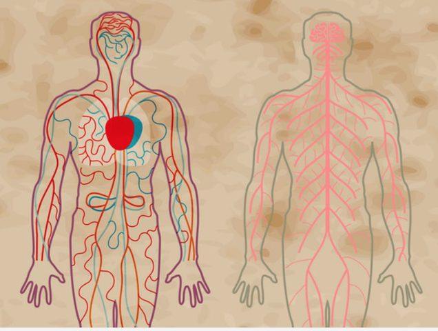 هل يؤثر مرض إنفصام الشخصية على الجسم ؟