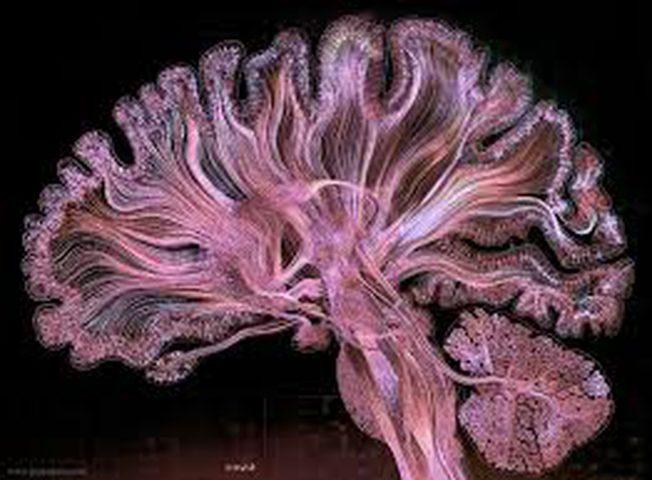 علماء يتعلمون فك شيفرات الدماغ لفهم الأمراض!