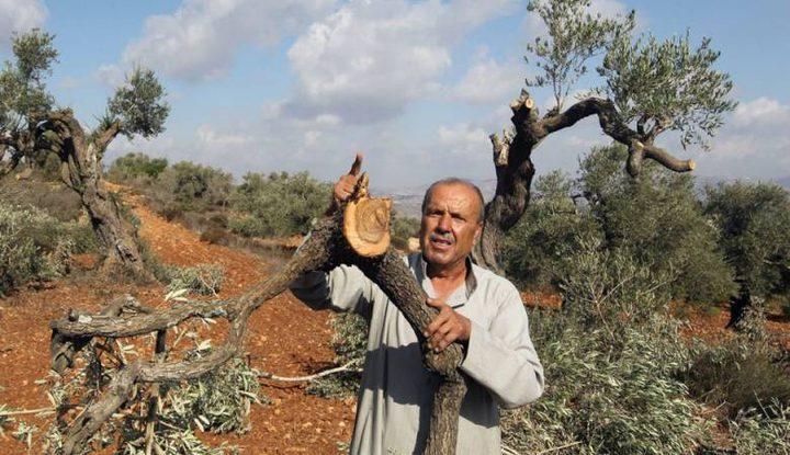 مستوطنون يقتلعون أشجار عنب في رام الله
