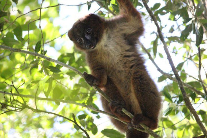 نظام تعرف على الوجه لحماية الحيوانات المعرضة للانقراض