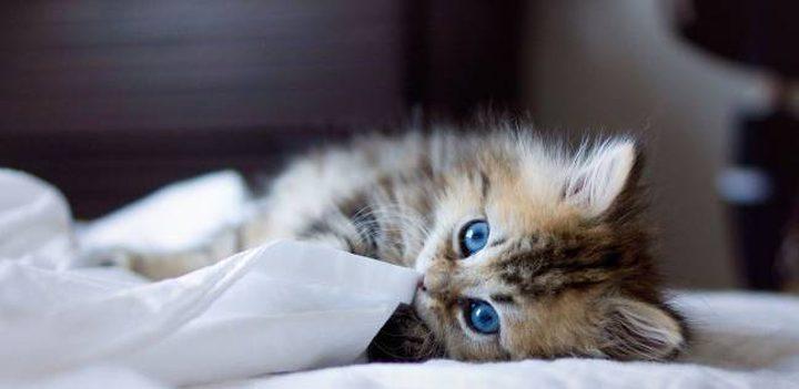خدمة تأجير القطط تكسب فندقا يابانيا شهرة واسعة
