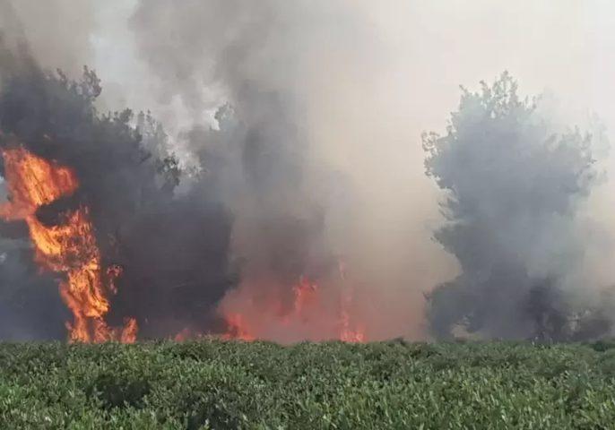 45 حريقا في مستوطنات غلاف غزة اليوم بسبب الطائرات الورقية