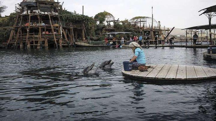"""الدلافين تنادي بعضها بـ """"أسماء"""" كالبشر!"""