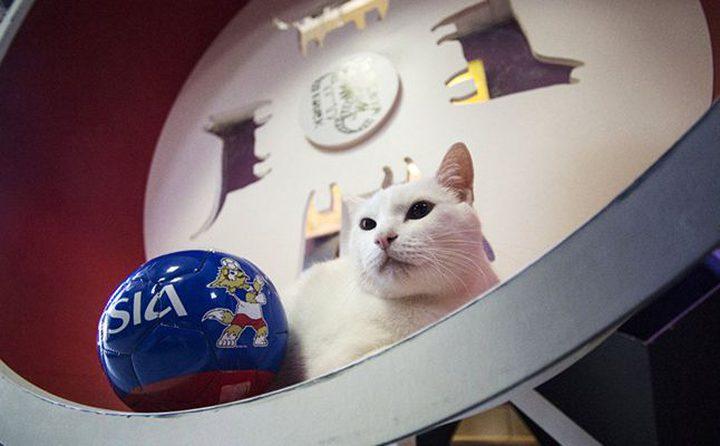 """القط """"أخيل"""" يختار روسيا للفوز على السعودية بافتتاحية المونديال"""