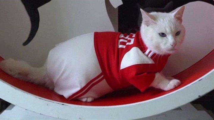 قط روسي يتنبأ بنتائج مباريات كأس العالم...هل سيصيب؟
