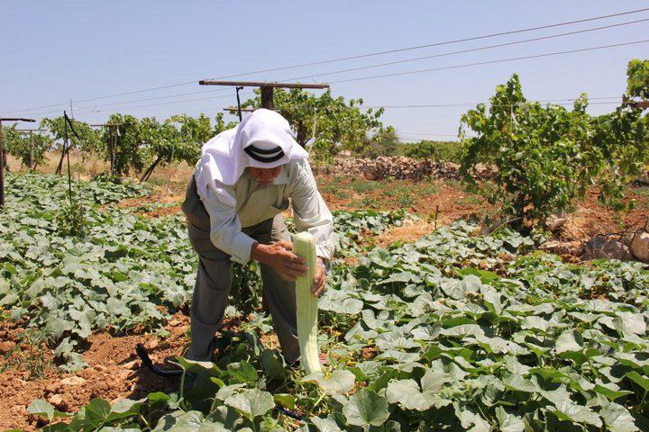 الاحتلال يعتدي على مزارعي شمال الخليل