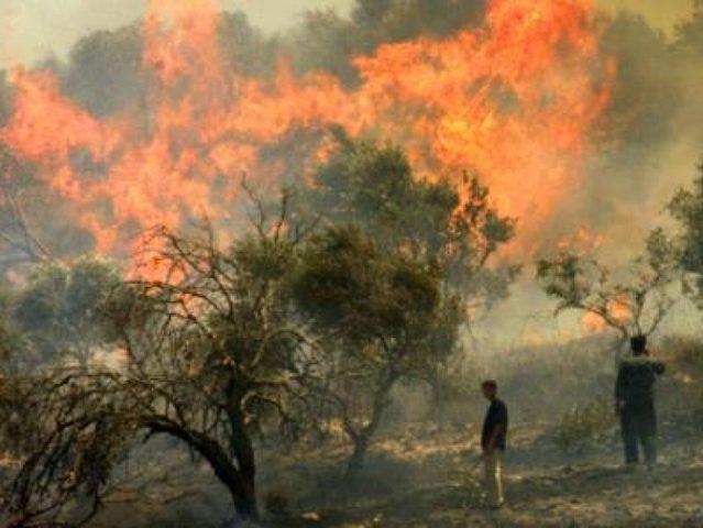 """مستوطنون يحرقون 300 شجرة زيتون في قرية """"تل"""""""