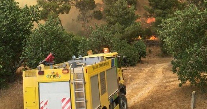 مستوطنون يحرقون عشرات الدونمات شرق نابلس
