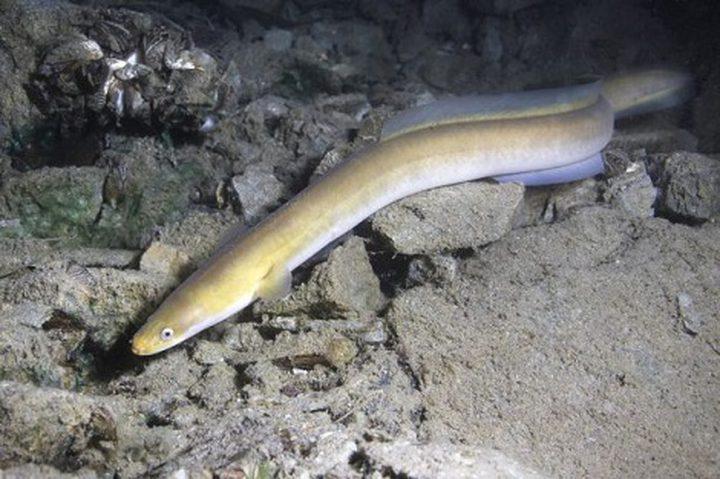 إحباط محاولة تهريب أسماك مهددة بالانقراض