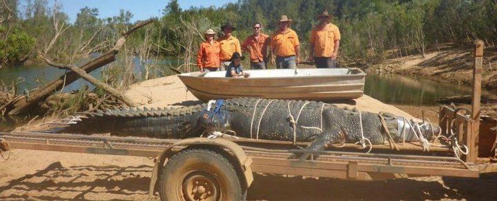 امساك تمساح عملاق في أستراليا بعد 10 سنوات من محاولات صيده