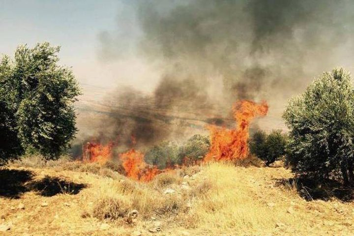 حريق يطال 100 شجرة زيتون معمرة في بلدة كفردان
