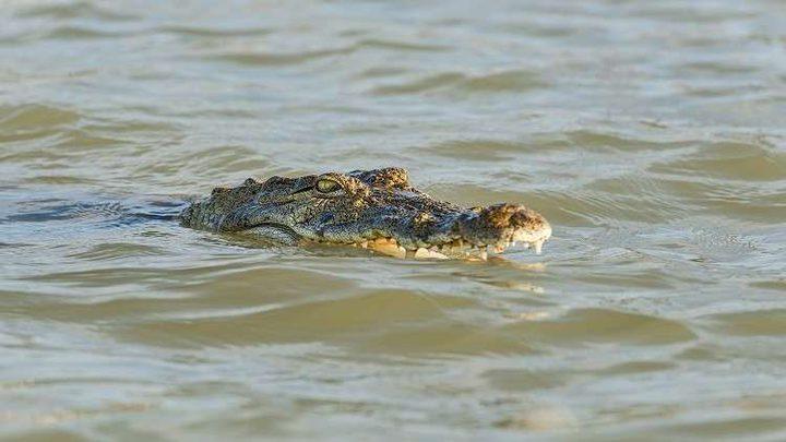 أم ترمي بنفسها في نهر لإنقاذ ابنها من تمساح