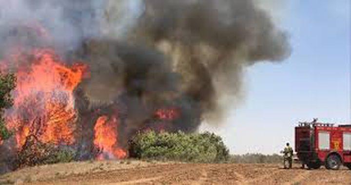 إسرائيل: انخفاض كبير بأعداد الحرائق
