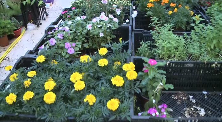 بالفيديو.. تعرف على أنواع الورود المختلفة
