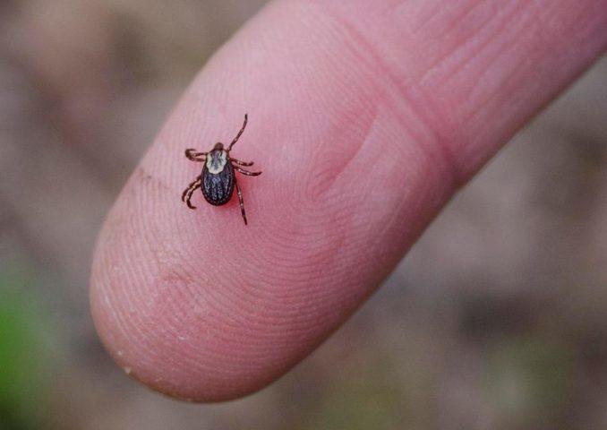 ما هي فصيلة الدم التي تفضلها الحشرات ؟