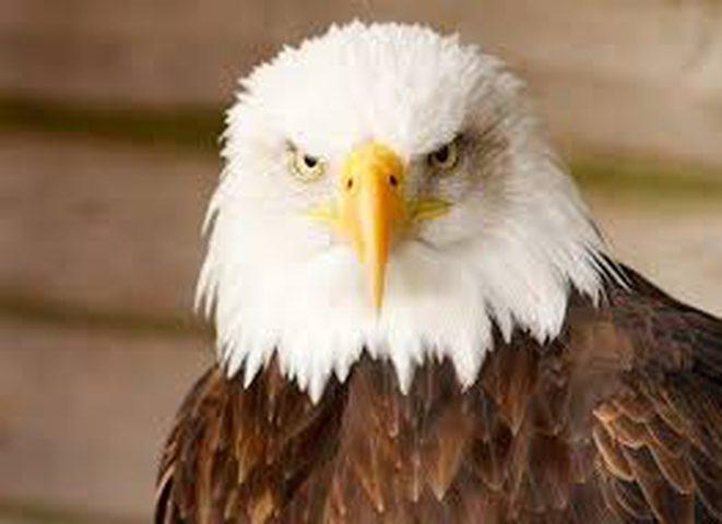 """""""الحيوانات المهددة"""" لم تسلم من تدخلات ترامب"""