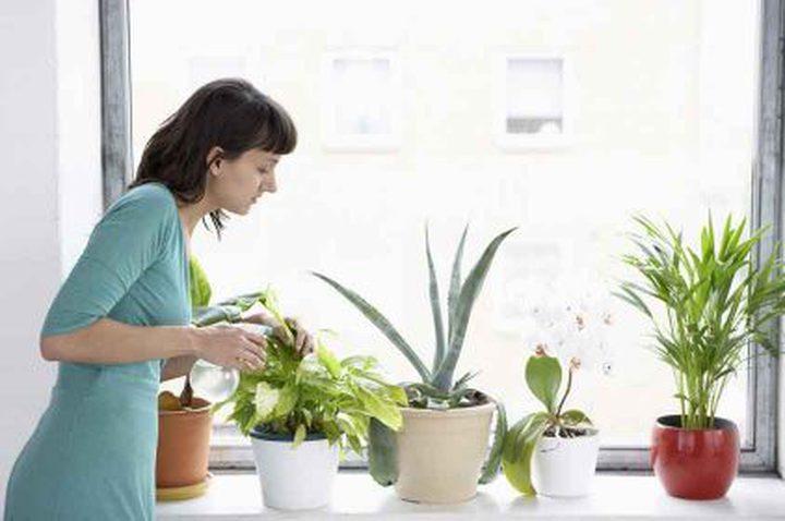 أهمية وضع النباتات في المنزل