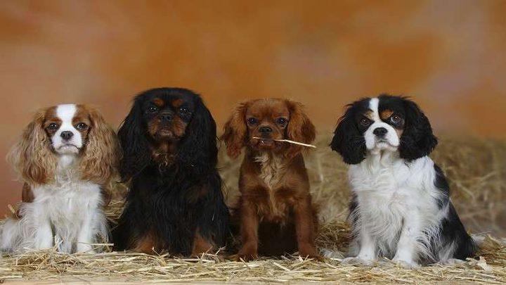 تجربة تكشف مستوى جديد من وفاء الكلاب!