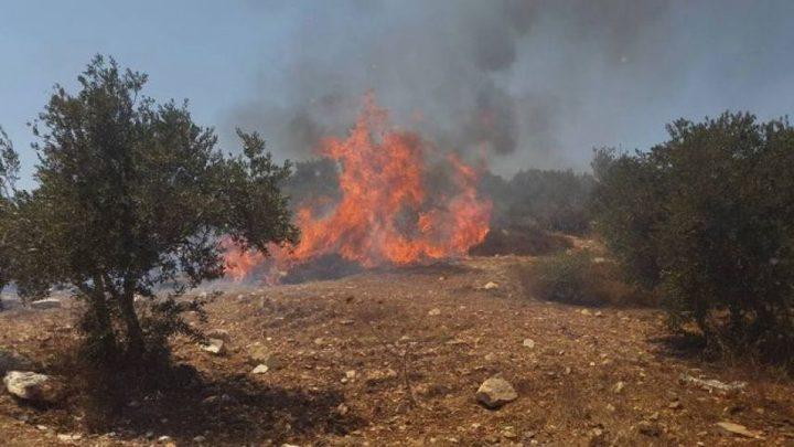مستوطنون يحرقون مئتي دونم من أراضي جيت